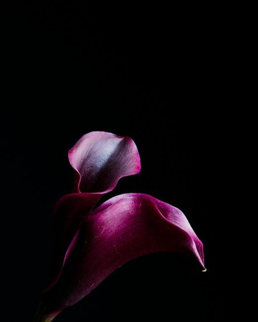 creocollective-shop-floral-19