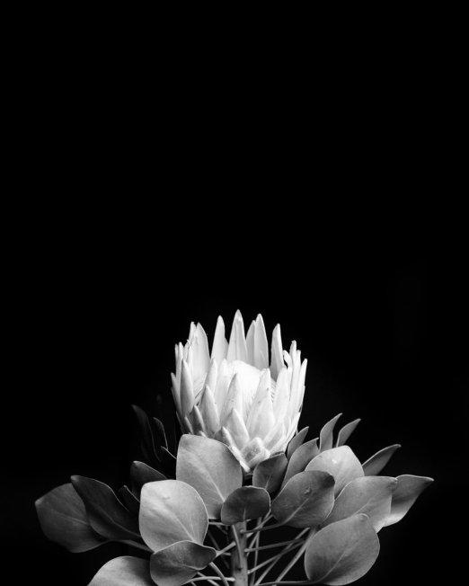 creocollective-shop-floral-47