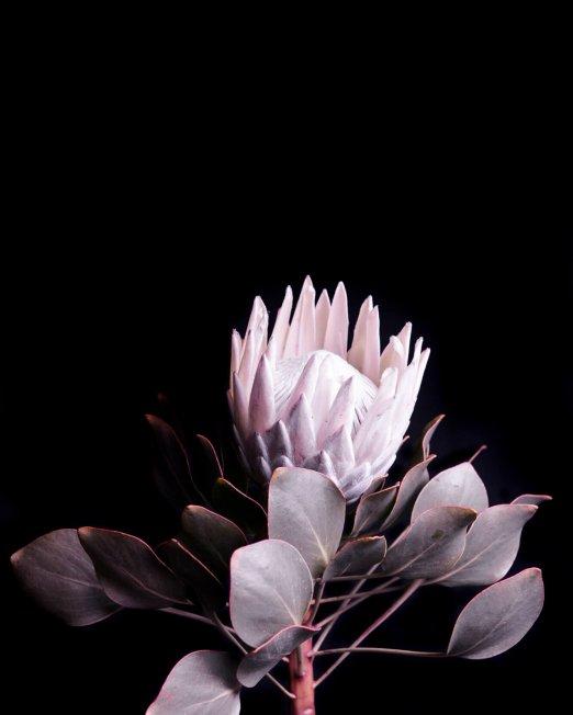 creocollective-shop-floral-5