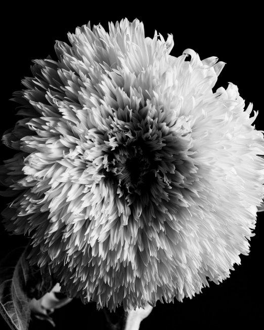 creocollective-shop-floral-8