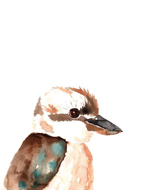 Kookaburra-A4